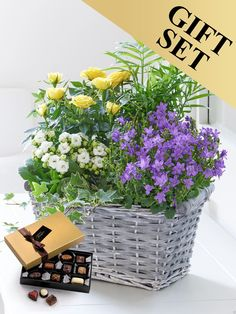 This basket of flowering plants is like a miniature garden that can be enjoyed inside for weeks to come. Order your summer planted basket now Mothers Day Flowers, Send Flowers, Wedding Flowers, Summer Plants, Summer Flowers, Kalanchoe Flowers, Plant Basket, Order Flowers Online, Planting Roses