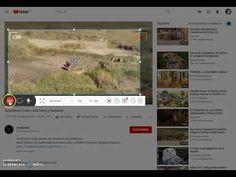 Cómo capturar cualquier vídeo o trozo de vídeo incluido sonido - YouTube