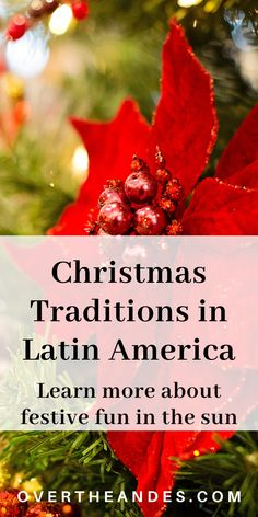 Christmas traditions in Latin America are diverse. In some countries, Christmas falls in the summer. These traditions show Christmas celebrated in the sun. Check out Christmas in Uruguay, Puerto Rico, Cuba and other parts of the region. #LatinAmericaCulture #ChristmasInLatinAmerica #CulturalDiversity #ChristmasTraditions Latin American Culture, Latin American Food, Hispanic Culture, Spanish Christmas, Christmas Carol, Christmas Activities, Christmas Traditions, Teaching Culture, Traditional Christmas Food