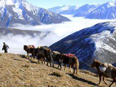 gallery   take a sneak peak at possibility. Tibet, Take That, Mountains, Gallery, Nature, Travel, Animals, Naturaleza, Viajes