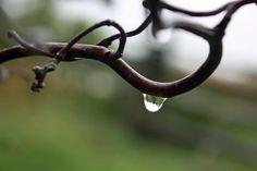 :D love water drops
