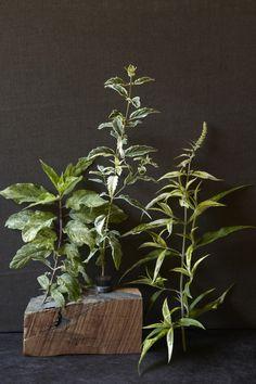 variegated-plants-3-maria-robledo-gardenista