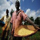 El negocio agrícola y el hambre