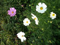 꽃의 향기 보다 생김새 보다 중요한 것은 열매 입니다.