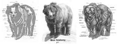 Animal Anatomy: Grizzly Bear by ~89ravenclaw on deviantART