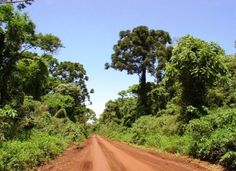 Imagen de Selva Paranaense. Gentileza UMSEF - SAyDS