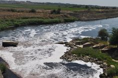 Edirne'de Ergene Nehri'nin suladığı alanlarda yetişen pirincin kansere yol açabileceği uyarısında bulunan Gastroenteroloji Uzmanı Dr. Dilek Tucer, Edirne Valisi Dursun Ali Şahin tarafından görevinden alındı.
