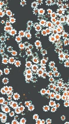 Frühling Wallpaper, Retro Wallpaper Iphone, Spring Wallpaper, Unique Wallpaper, Flower Wallpaper, Nature Wallpaper, Iphone Wallpapers, Perfect Wallpaper, Wallpaper Ideas