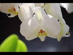 Abraham Hicks 2015 ~ This is a really good day - a morning meditation - YouTube