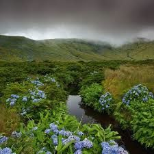 Flores:  A small stream runs past some of the flowers for that grow on te island and gave it its name.