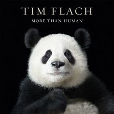 "More than Human by Lewis Blackwell and Tim Flach: ""A gallery of animal portraits that are unlike anything we've seen before."" —The Wall Street Journal  #Books #Photography #Tim_Flach #Lewis_Blackwell"