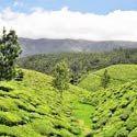 Kerala Budget Holidays with Munnar Kumarakom & Alleppey Package - 5 Days