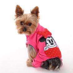 Cute dog clothes - 10 PHOTO!