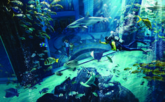 Always wanted to experience scuba diving but not trained for it? Atlantis, The Palm Dubai offers Atlantis Dive, a programme that will train you to dive into the largest open air aquarium in the Middle East and Africa- the Ambassador Lagoon. The aquarium is home to 65,000 marine animals of all shapes and sizes....Read more on : www.ll2.in #AtlantisThePalm #Dubai #Vacation #Luxurytravel #MarineAnimals