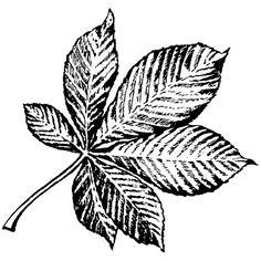 Personal Impressions Horse Chestnut Leaf Rubber Stamp | Hobbycraft