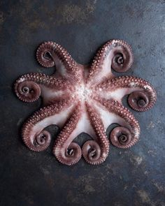 Octopus / Sea food Photography | by Joseph De Leo #foodstyling #foodography