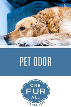 17 best pet odor exterminator candles images in 2019 pet odors rh pinterest com