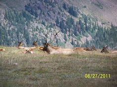 Elk hunting in Colorado..... Long a dream of mine
