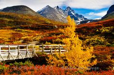 Autumn colors at Turtagrø at the foot of Sognefjellet