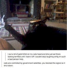 Cats run by gov sattelties.