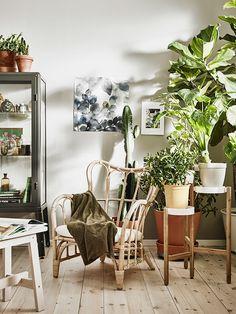 Vetplanten en cactussen staan super in huis | IKEA IKEAnl IKEAnederland plant planten cactus inspiratie wooninspiratie interieur wooninterieur kamer woonkamer groen duurzaam natuur natuurlijk MASTHOLMEN fauteuil hip trends