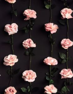 definepattern: preview of a rose pattern made from a photo by David MeredithFor more floral patterns click here
