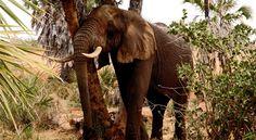 Tanzanie Voyage Paris 14, Have A Nice Life, Safari Holidays, Wildlife Safari, Elephant, Africa, Australia, Parfait, Join
