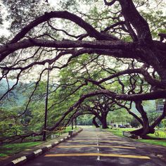 The beauty and serenity of Taiping Lake Garden, Perak. Malaysia Truly Asia, Lake Garden, Taiping, Ipoh, Paradise On Earth, Beautiful Places To Visit, Serenity, Destinations, Sidewalk