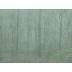 Fourth large image of Skog Green