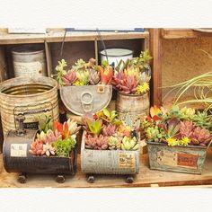 Best 10 – Page 40110252919273601 – SkillOfKing.Com Garden Terrarium, Plantin. Best 10 – Page 40110 Succulent Gardening, Garden Terrarium, Container Gardening, Succulents In Containers, Cacti And Succulents, Planting Succulents, Growing Succulents, Container Flowers, Garden Crafts