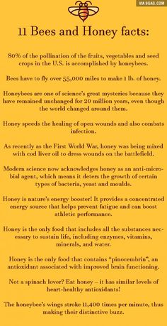 11 Bees and Honey facts you probably didn't know! can find Facts you didnt know and more on our Bees and Honey facts you probably didn't know! Honey Bee Facts, Bee Quotes, I Love Bees, Backyard Beekeeping, Bee Friendly, Buzzy Bee, Bee Happy, Save The Bees, Facts You Didnt Know