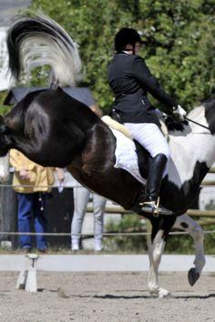 6 Wege für Reiter gegen Nervenflattern im Sattel Bewährte Tipps, wie Du Deine Angst beim Reiten, Angst nach einem Reitunfall, Angst vor Pferden, Angst vorm Bocken, Durchgehen, Stürzen überwinden kannst. #Pferde #Reiten
