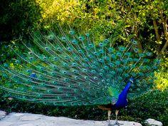 Bird Sanctuaries in Punjab, India @ Sanctuariesindia.com