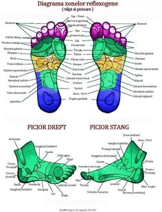 Foot Reflexology, For Your Health, Good To Know, Health Fitness, China, Iphone 6, Healthy, Google, Medicine