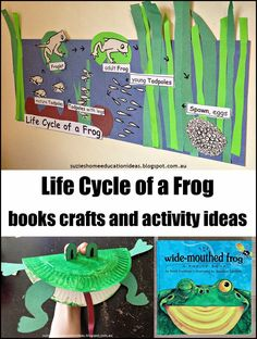 Activity ideas, crafts, printables and book suggestions for learning about the life cycle of a frog.