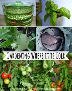 Gardening where it's cold (Zone 3) is different to warm zones. If you know the differences, you can grow lots of food where it is cold, too.