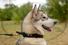 Get Best Dog Collar for training and walking. Comfy handle, strong leather and stitching makes it one of the most popular dog training collars. Dog Harness, Dog Leash, Dog Training Equipment, Every Dog Breed, Dog Muzzle, Designer Dog Collars, Leather Dog Collars, 2 Ply, Dog Supplies