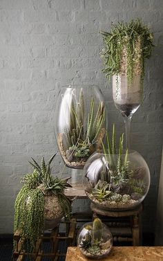 Here we have this succulent DIY idea of glass terrariums which are recreating the oasis atmosphere. You can fill your wine glasses of any kind with tiny white pebbles and sand. You can place cactus and other such plants paired with a few rocky stones to give it more natural look.