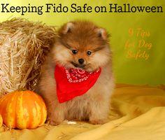 9 Ways to Keep Your Dog Safe on Halloween Night