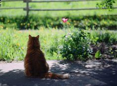 tranquil garden kitty