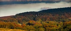 Lantern wood in glorious autumn at Lyme, Cheshire  (c) National Trust Images/Garry Lomas Photography