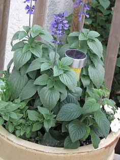 Place a Solar light in potted plants for nice nighttime accent.