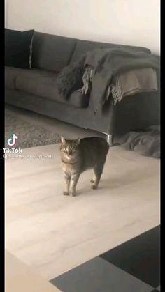 Funny Cute Cats, Funny Animal Jokes, Funny Animal Videos, Cute Funny Animals, Funny Animal Pictures, Animal Memes, Cute Baby Animals, Cute Dogs, Videos Funny