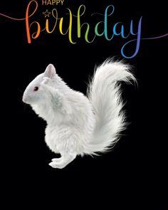 Happy Birthday Dancing, Happy Birthday Greetings Friends, Funny Happy Birthday Images, Happy Birthday Wishes Photos, Happy Birthday Video, Happy Birthday Celebration, Cute Happy Birthday, Birthday Wishes Funny, Happy Birthday Messages