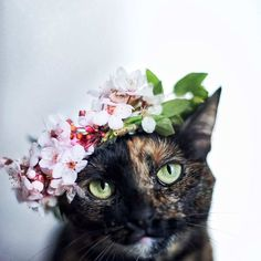 Magdalena Grześkowiak Captures Her Cat Through The Seasons #inspiration #photography