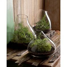 Love these free form hand-blown glass terrariums!