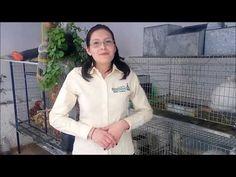 68 Ideas De Conejos Conejos Cuidado De Conejito Jaulas De Conejos