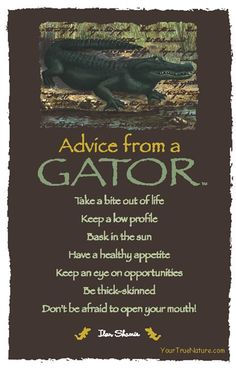 Spirit Totem Animals:  #Advice from a #Gator.
