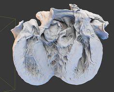 Human Heart 3d Model on Behance