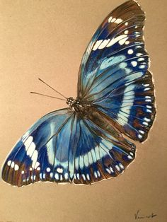 Blue Butterfly / Papillon bleu Pastel drawing 42 cm x 29.7 cm